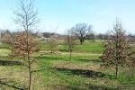 drzewa_odra